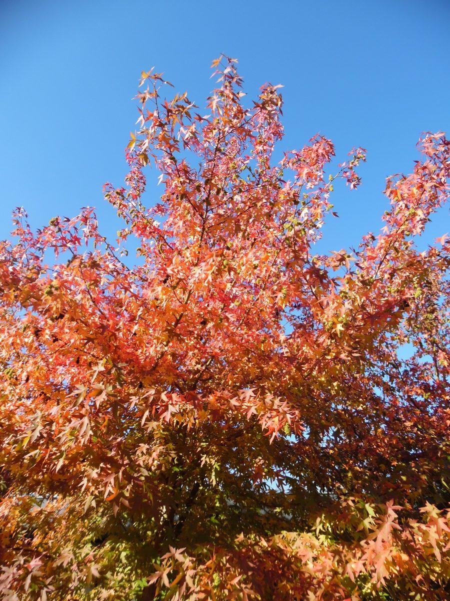7 redenen waarom ik zo van de herfst houd